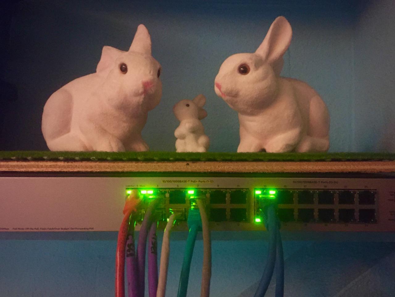 konijnen en switch