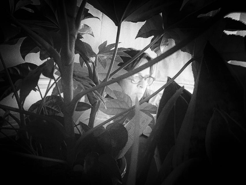 achter de planten