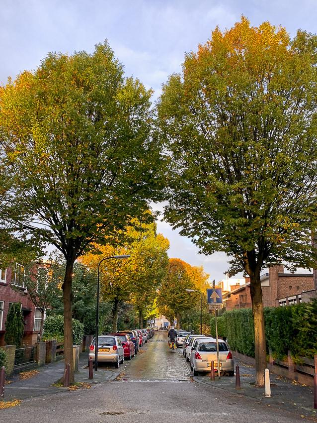 Bilderdijklaan, oktober #2