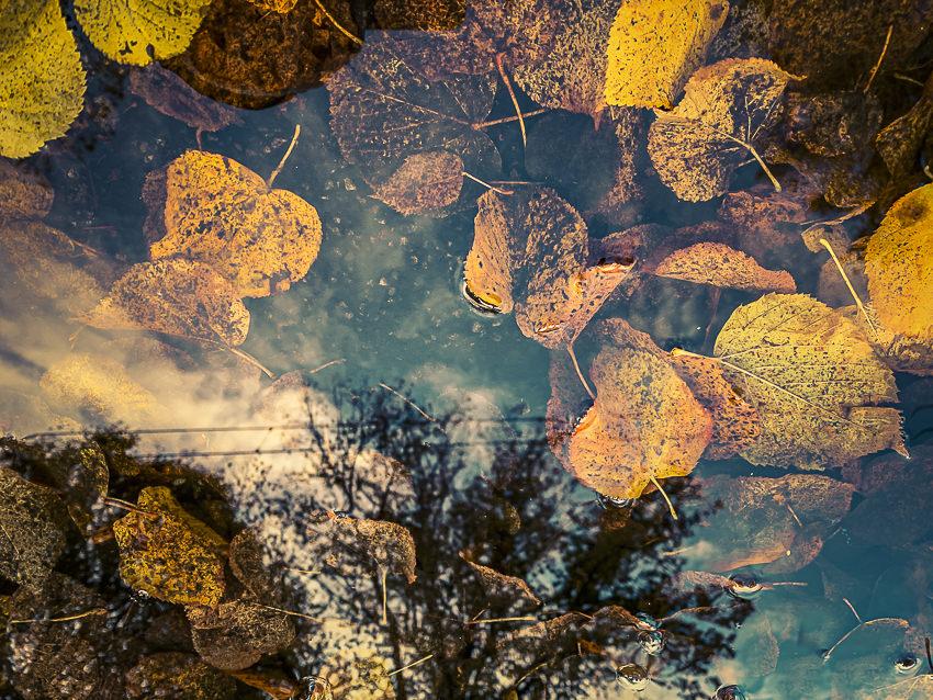 herfstbladeren #2