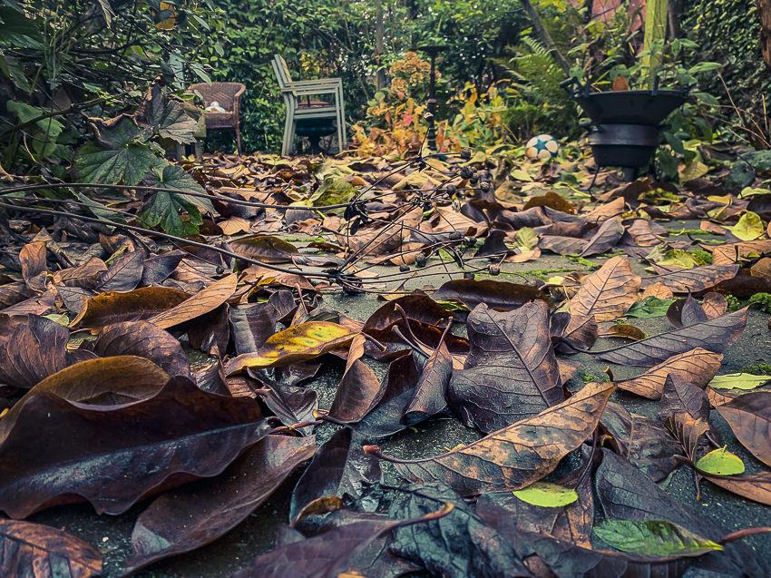 herfstbladeren #3