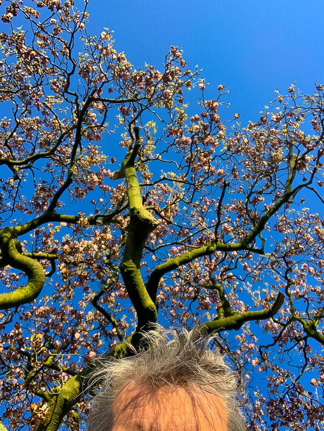 Magnolia & grijs haar