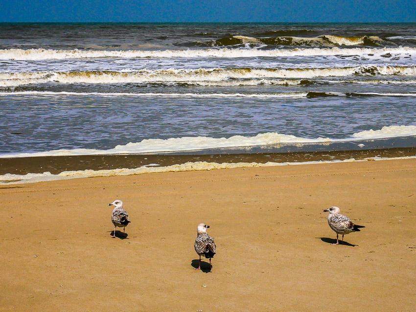 3 meeuwen op het strand