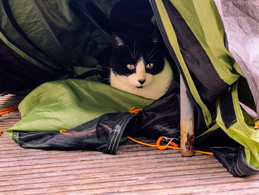 kat in tent